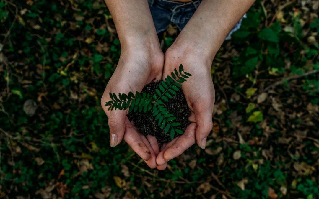 Cómo hacer tu negocio más sostenible: claves